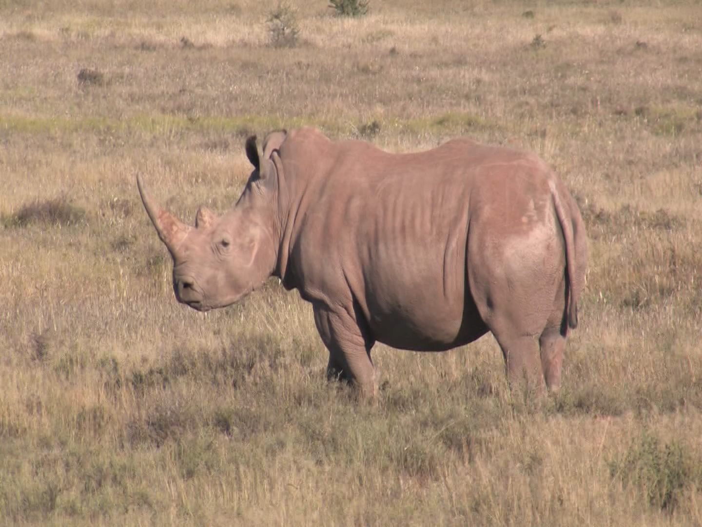 Rhino in Crisis: A Blueprint for Survival. Stakeholders meeting version.
