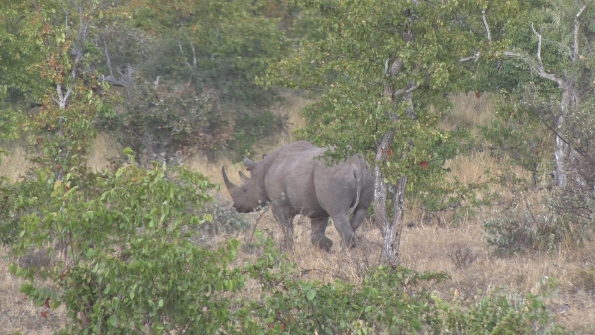 Operation Lock and the War on Rhino Poaching.