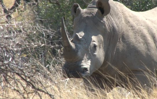 Swaziland's CITES Proposal to Sell White Rhino Horn.