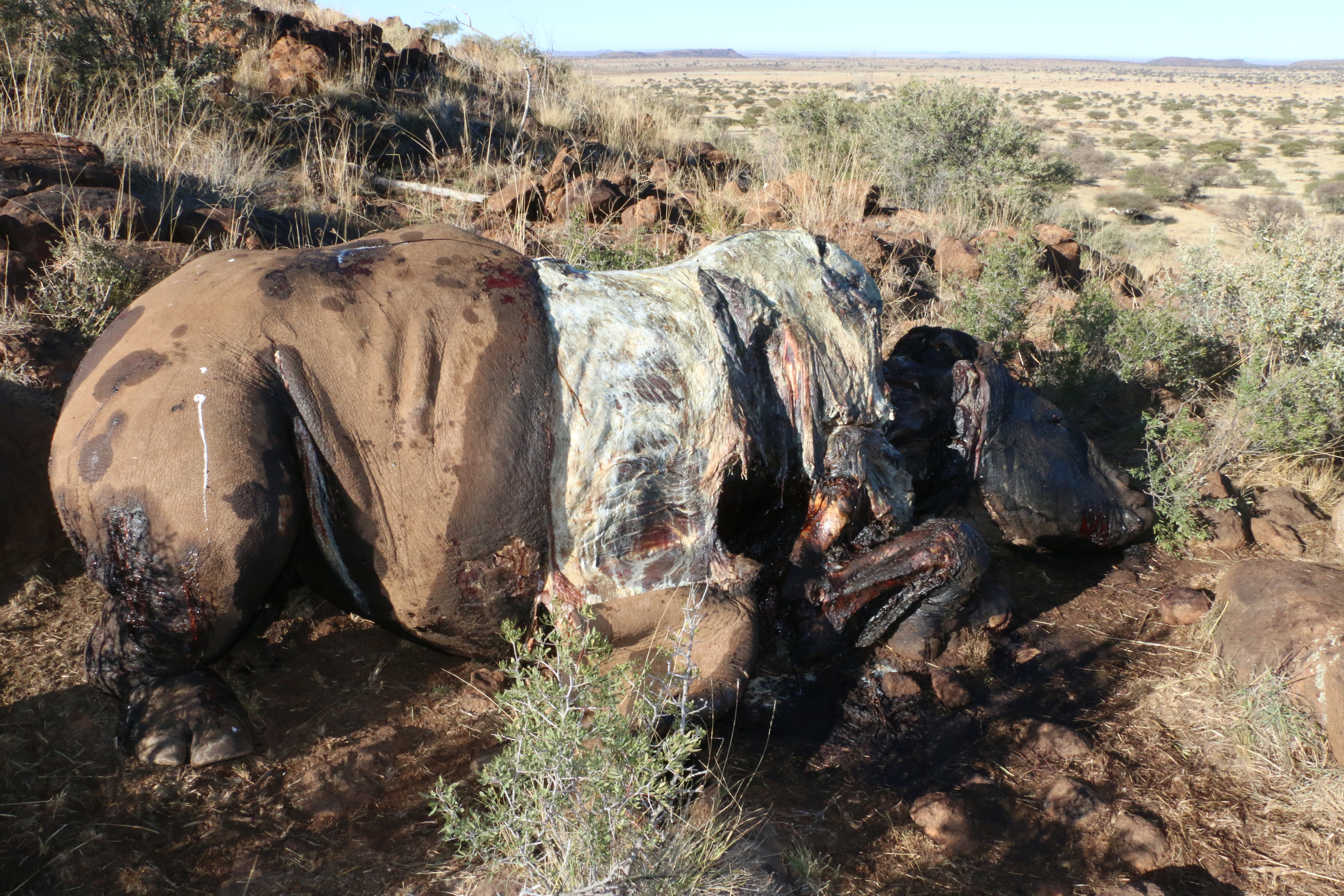 CITES and the Fate of Africa's Rhino.