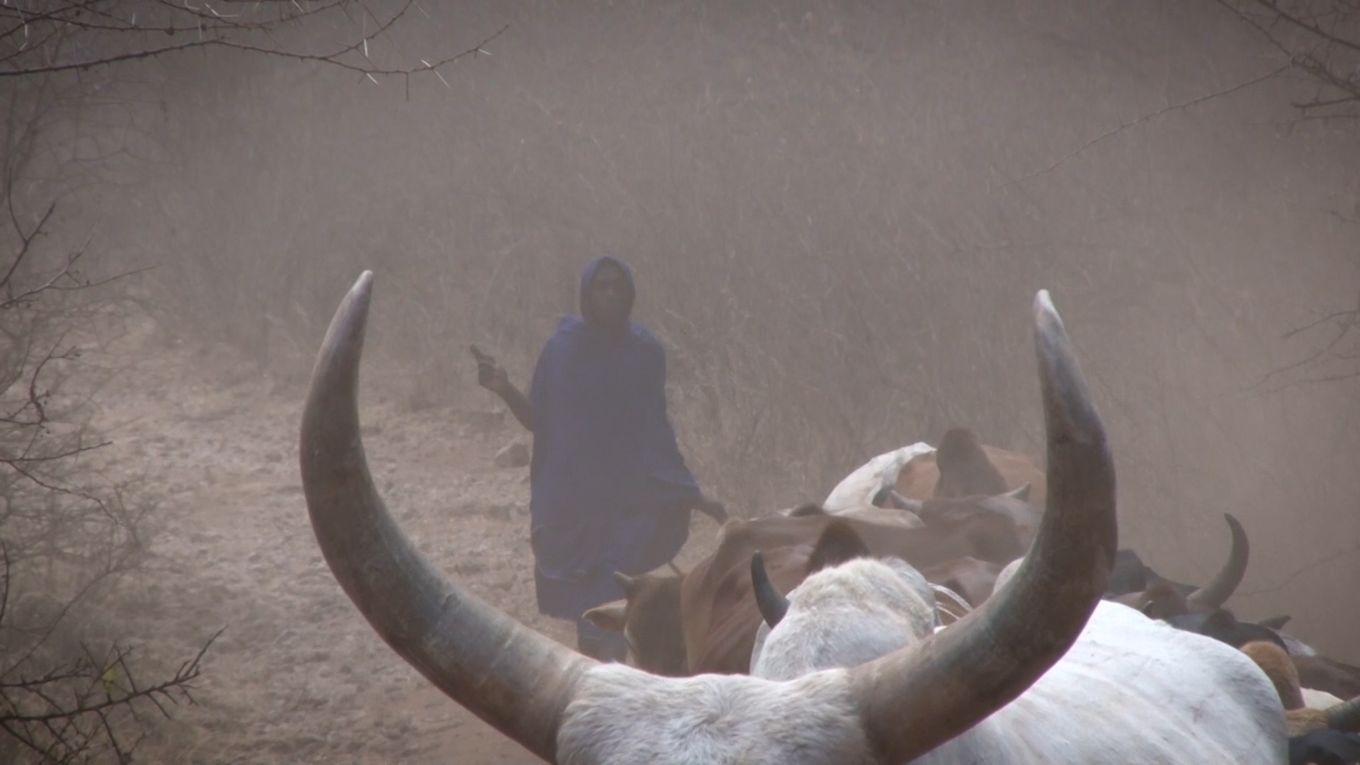 The Cattle Barons of Kenya.