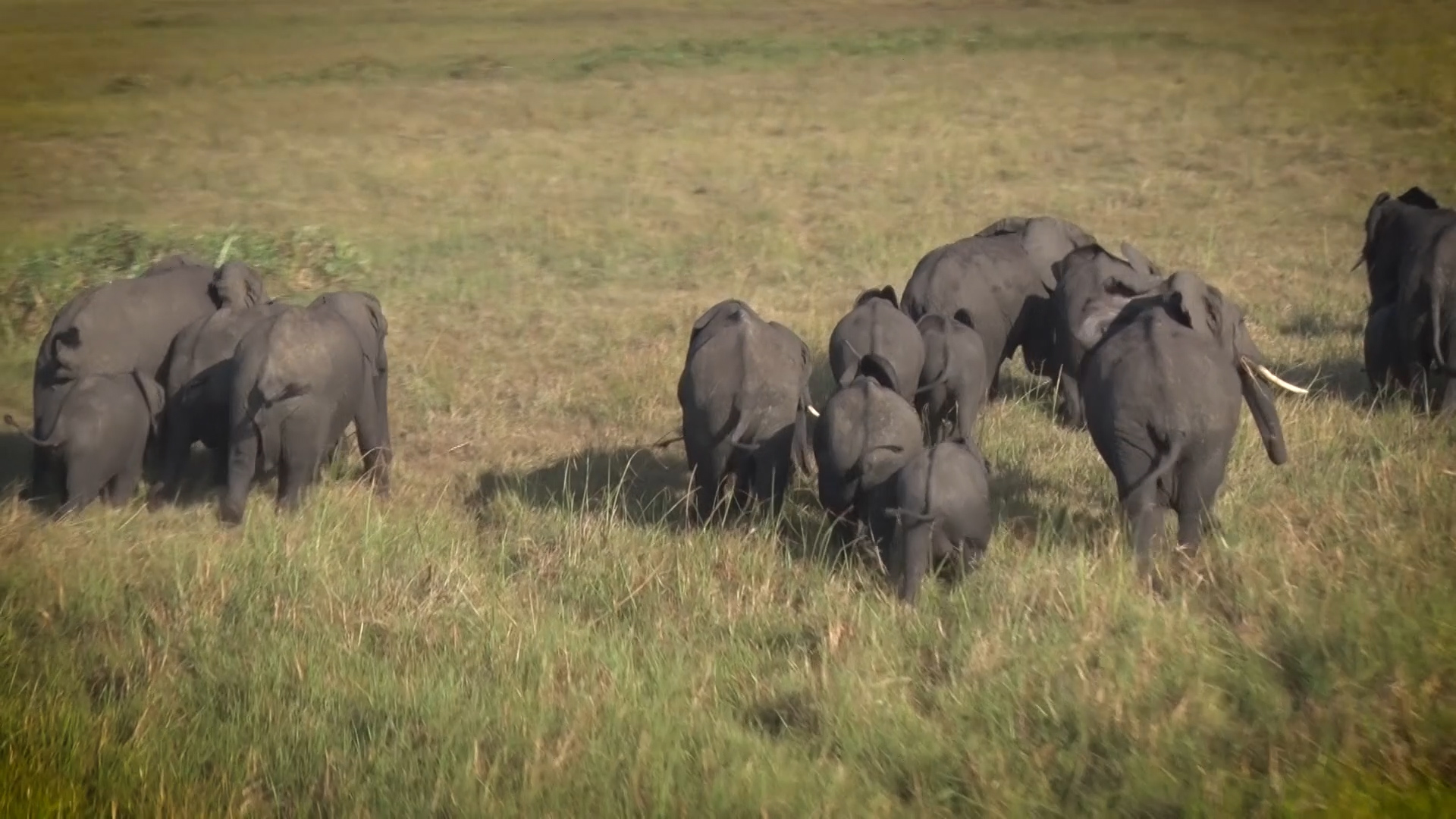 Theresa May and African Wildlife Policy –  Philosophical Bedfellows? By David Cook.