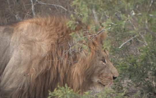 Cecil moment or Cecil movement.