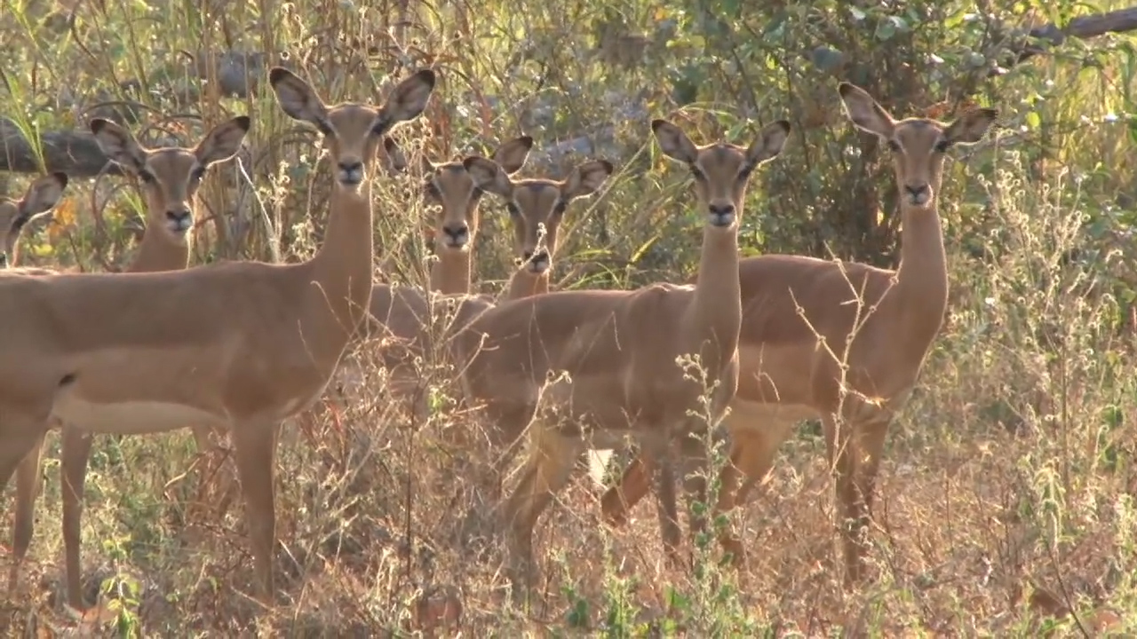 The Birth of Game Ranching in Zimbabwe.