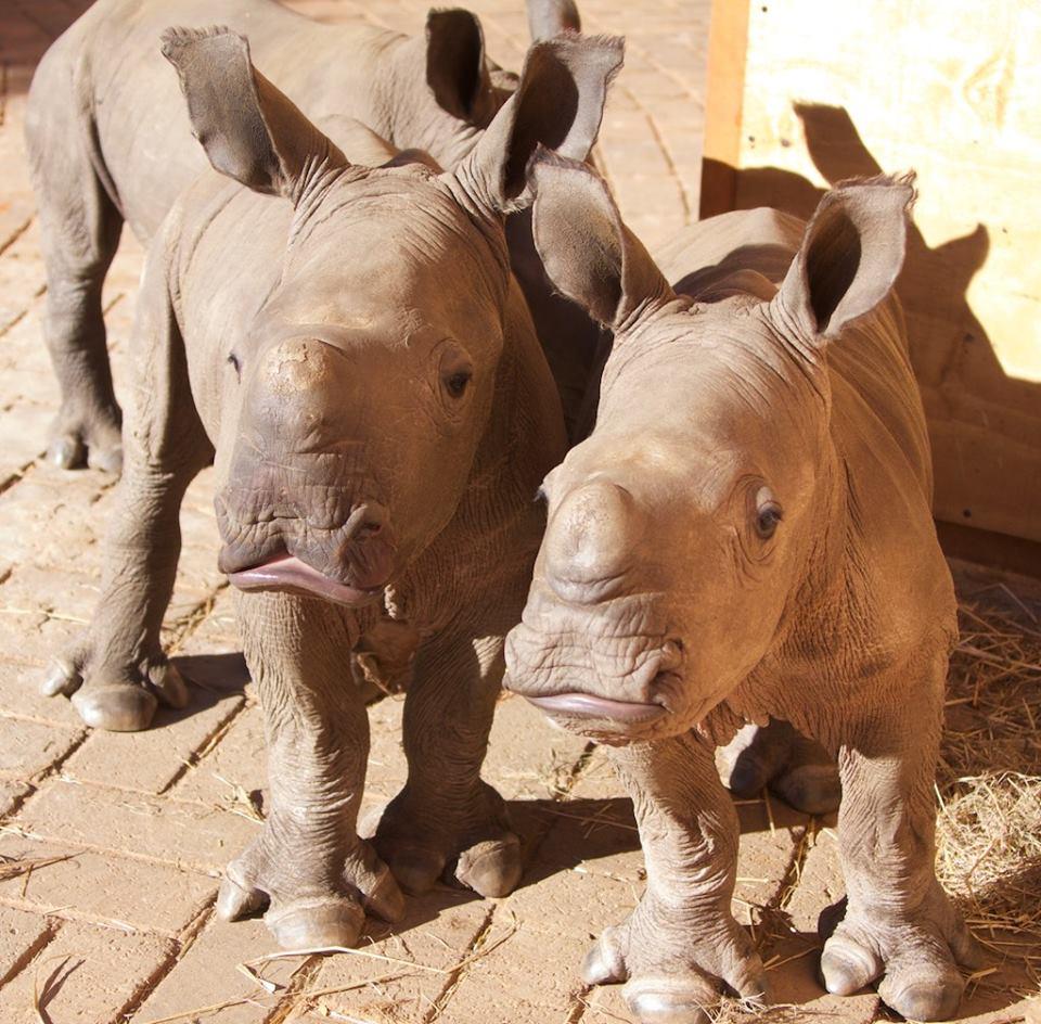 John Hume, a True Rhino Conservationist.