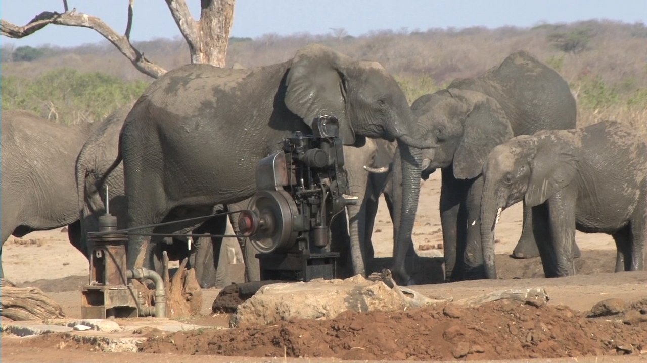 Strategies for Elephant Management by Douglas Wise.