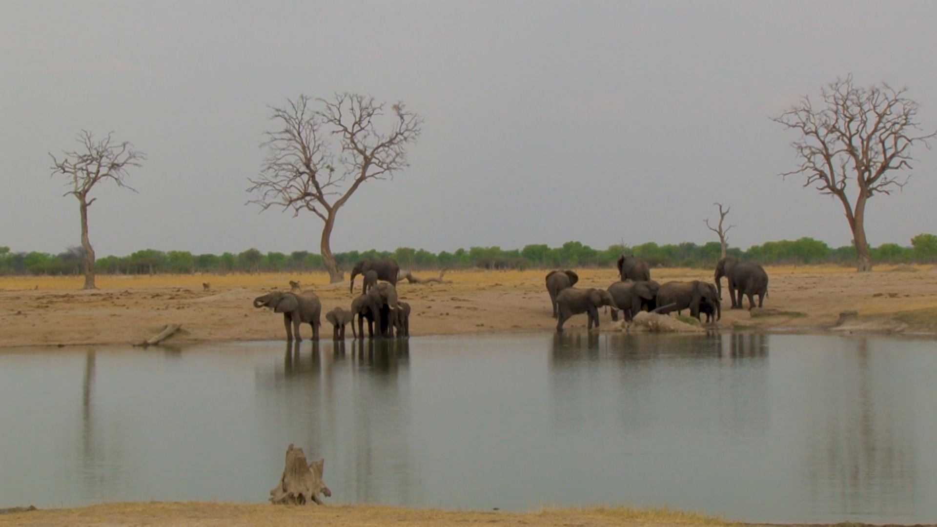 Elephant Effects on Ecosystems by Douglas Wise.