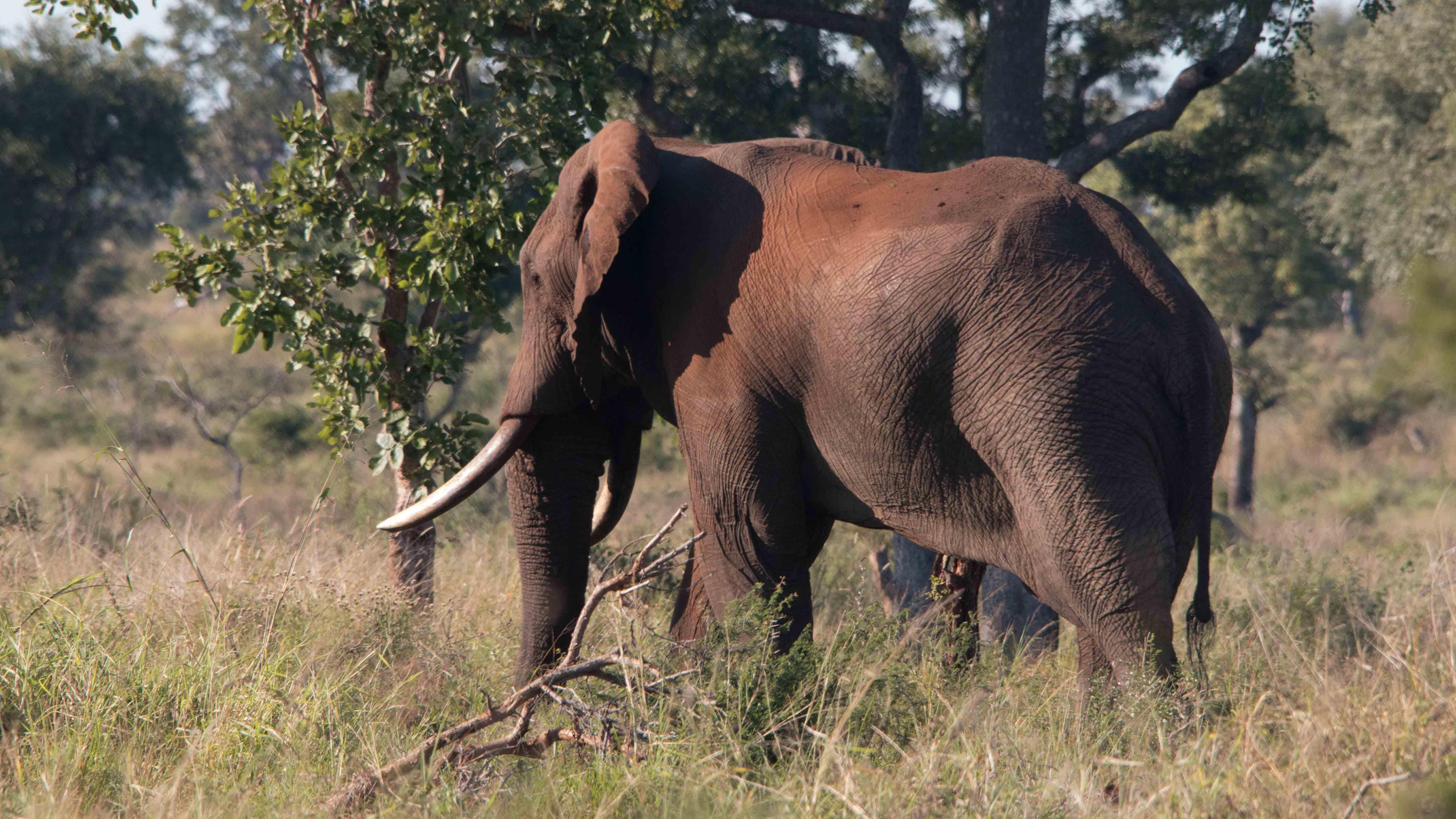 Elephant Densities in Africa. By Douglas Wise.