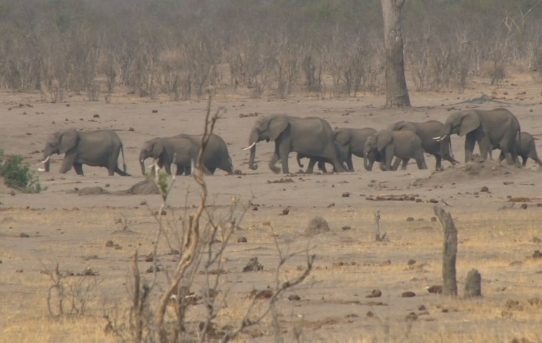 Ending Trophy Hunting of Elephants: Is this a Conservation Success? By Brendan Moyle.