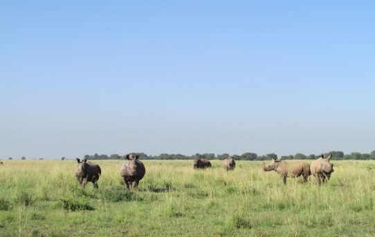 Buffalo Dream Ranch. By Bugs Van Heerden.