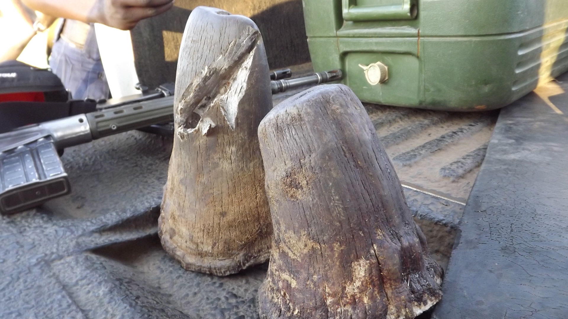China Reverses Ban on The Use of Rhino Horn and Tiger Bones in Traditional Medicine. By Dr. Chris Brown.