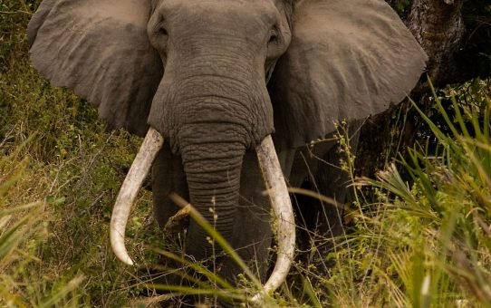 Selous Game Reserve: A Unique Wilderness. By W. Alan Rodgers and Rolf D. Baldus
