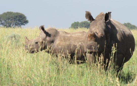 DISINVESTMENT IN RHINO IN SOUTH AFRICA.